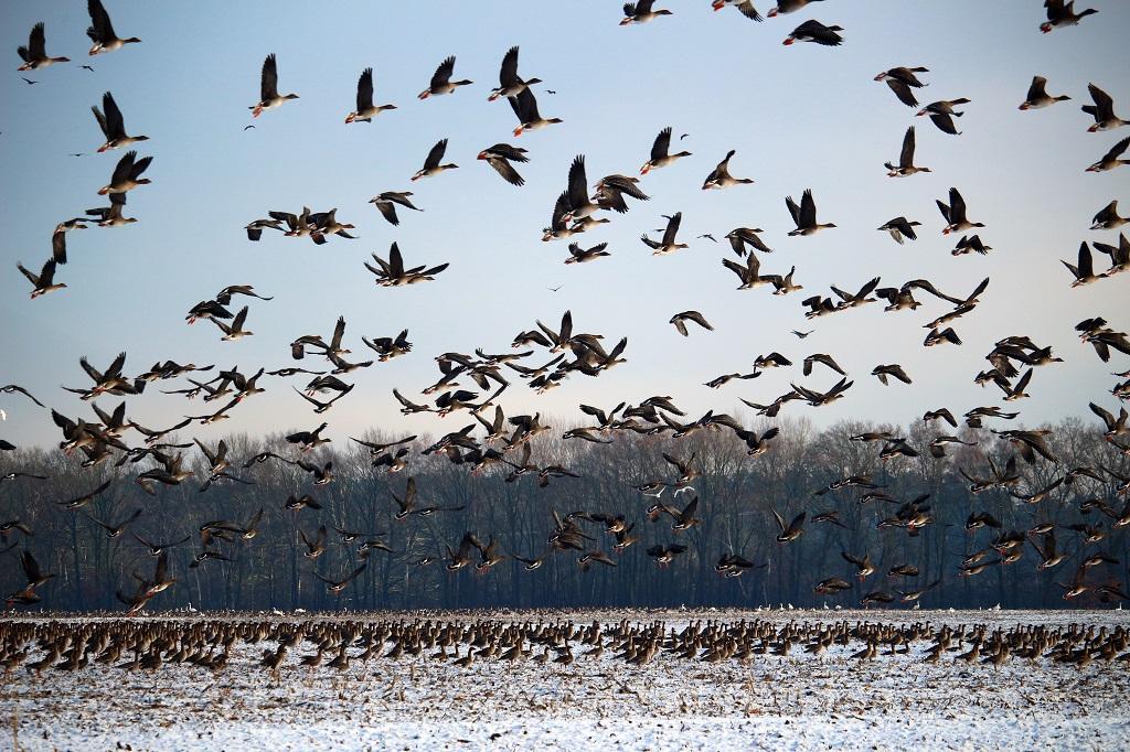 Нормы и цены на добычу охотничьих ресурсов в летней, осенний и зимний периоды в 2021-2022 годов